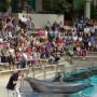 Dolphinarium, Germany. (Animal Public)