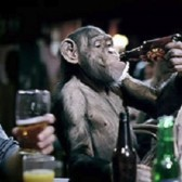 Chimp in advert