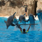 Spain, dolphins (BFF)