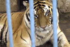 EU Zoo Inquiry
