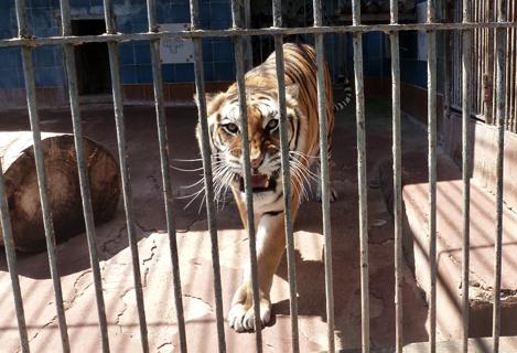 zoo_photo