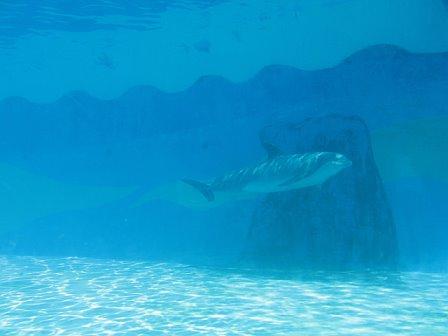 Captive dolophin (Photo: Born Free Foundation)