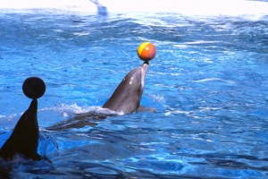 Captive dolphins (Photo: Born Free Foundation)