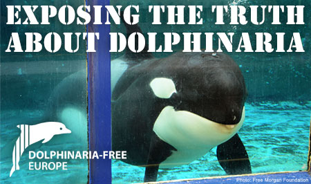 Dolphinaria-Free Europe: Exposing the truth about dolphinaria (Photo: Free Morgan Foundation)
