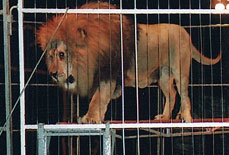 Animals in circuses