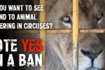 Circus-Animal-Vote-featured
