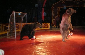 Performing bears in Spanish circus (Photo: Born Free Foundation)