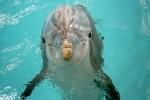 Delfi the dolphin