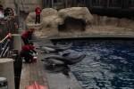 Vancouver Aquarium dolphins